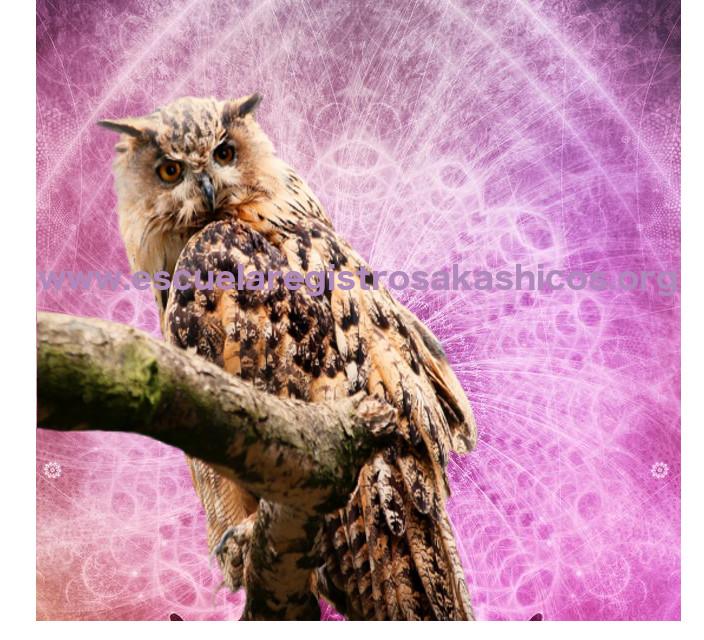 El buho ha simbolizado la sabiduría desde muy antiguo. El conocimiento de este tipo de simbología enriquece al lector de Registros Akáshicos.